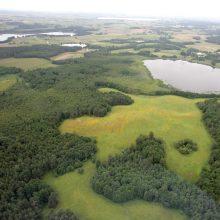 Vilniaus miesto savivaldybei bus perduoti 929 miško žemės sklypai