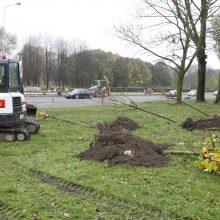 Rekonstrukcijos baigiamieji darbai: Mokyklos gatvėje sodina medelius