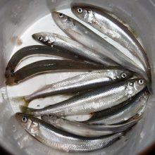 Prasidėjo stintmetis: žvejų žibintai nušvietė krantines