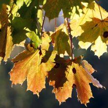 Uostamiestyje bus tikras ruduo, liko vos pora šiltų dienų