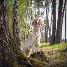 Laida – šunų mylėtojams