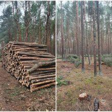 Ramina panikuojančius dėl kertamo pušyno: apžėlęs miškas virs parku