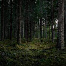 Miesto taryba spręs, ką daryti su klaipėdiečių valia: apklausa dėl Girulių miško nesulaukė dėmesio