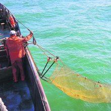 Lietuviškas žuvininkystės reguliavimas: aktyvesnės žvejybos Baltijos jūroje nebus?