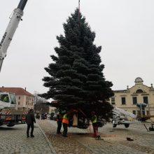 Kalėdų eglės kelionė per Klaipėdą: rinko iš dešimties gražiausių žaliaskarių