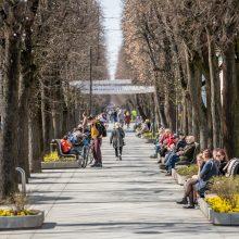 Kauniečiai džiaugėsi pavasarišku sekmadieniu