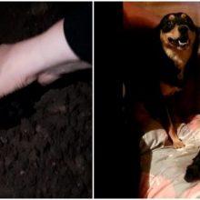 Gyvus šuniukus užkasusiam vyrui – keturi mėnesiai viešųjų darbų
