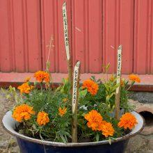 Mobilu: darželis su gėlėmis kiaurame dubenyje.