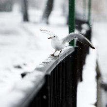 Sinoptikai atšaukė arktinės žiemos prognozę