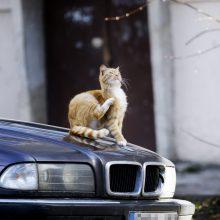 Dingo augintinis: dėl katino – į policiją