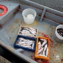 Aplinkos ministerijai – žvejų mėgėjų protestas