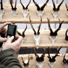 Medžioklės trofėjus vertins nebe aplinkosaugininkai, o medžiotojų asociacijos