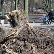 Seime – diskusija apie medžių išsaugojimą Vilniuje