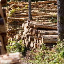 Opozicija laukia ministro paaiškinimų dėl miškų ir medienos verslo