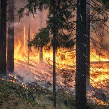 Miškininkai perspėja: miškai išdžiūvę – gaisrų pavojus išlieka didelis