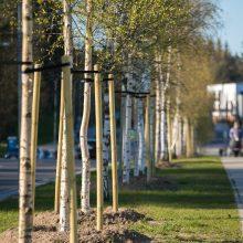 Įspėja vilniečius: daugiabučių kiemuose medžius galima genėti pasitarus su seniūnija