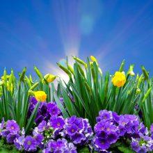 Savaitgalio orai: dienos šiltės ir džiugins saulė