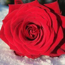 Dienos horoskopas 12 Zodiako ženklų <span style=color:red;>(vasario 9 d.)</span>