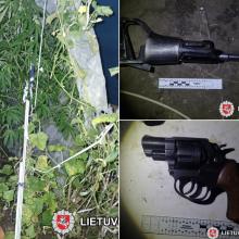Trakų policijos laimikis – pilnas šiltnamis kanapių ir ginklų arsenalas