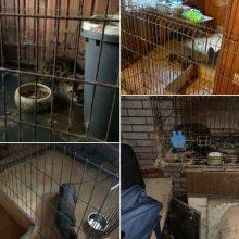 Marijampolėje aptikta nelegaliai veistų gyvūnų: sąlygos – pasibaisėtinos