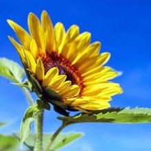 Orai: savaitgalį kepins saulė, bet kitą savaitę – jau pokyčiai