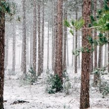 Ministerija žada siekti, kad ribojimai įsigyti mišką būtų panaikinti