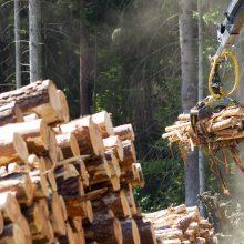 Tęsiami susisiekimo infrastruktūros darbai Žalgirio gatvėje: dalies medžių pašalinimo neišvengta