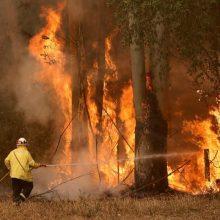 Australijos tyrėjai perspėja: vėliausi krūmynų gaisrai nėra vienkartinis įvykis