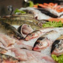 Po siūlymo uždrausti verslinę žvejybą Kuršių mariose – žuvininkų kritika