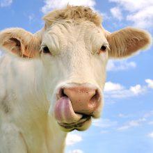ŽŪM: paramą nuo šiol galės gauti visi ūkininkaujantys ekologiškai