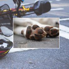 Panevėžyje motociklininkas sužalojo dviratininkę ir pražudė jos šunį
