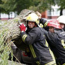 Sekmadienį ugniagesiai daugybę kartų vyko šalinti stipraus vėjo išverstų medžių