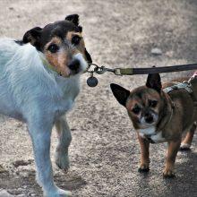 Kaip atpratinti šunį nuo pavadėlio tampymo ir agresijos prieš kitus?