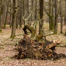 Uraganinis vėjas Kauno apskrityje plėšė stogus, vertė medžius: padaryta didelė žala