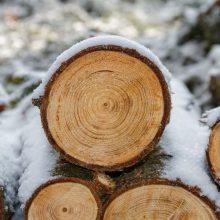 Panevėžio rajone iš miško pavogta 42 kubiniai metrai rąstų
