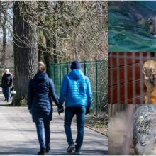 Zoologijos sodas apgulties išvengė, bet pirmieji lankytojai – jau nuo ankstaus ryto