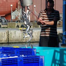 Nykstanti žvejyba ir informacinė sistema