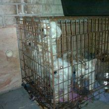Siaubingos istorijos tęsinys: žmonės išvadavo ir daugiau šuniukų