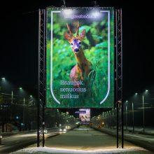 Pažinti sengirę: girių gyventojai atkeliauja į Lietuvos miestus