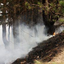 Numesta nuorūka vis dar sukelia trečdalį miškų gaisrų