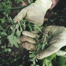 Specialistė patarė, ką rudenį atlikti sode, darže ir gėlyne