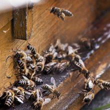 Rusijos bitynus niokoja masiniai šeimų išmirimai