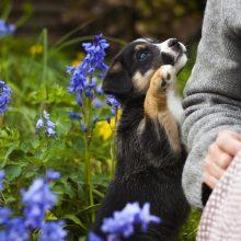Kokių skanėstų duoti šunims?