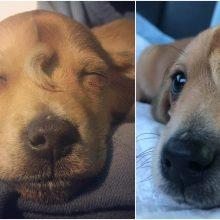 Ypatingas šuniukas sužavėjo tūkstančius: keturkojui ant kaktos – papildoma uodega