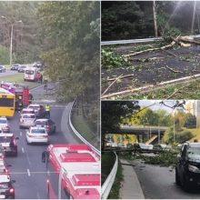 Laisvės prospekte ant automobilių užvirto medis: sutrikęs eismas, yra nukentėjusių