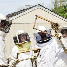 Parduotuvėse vis daugiau bičių produktų ir stebinančios bitininkų kūrybos