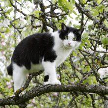 Gelbėdami katę S. Daukanto gatvėje ugniagesiai rizikavo sveikata