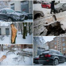 Ugniagesiai kliūtis šalina be atokvėpio: medžius teko nukelti ir nuo automobilių