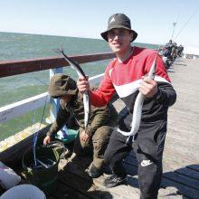 Palangos tiltą okupavo žvejai: laimikiai – įspūdingi