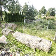 Netvarka bado akis klaipėdiečiams: kas išpjovė medžius kapinėse – mįslė